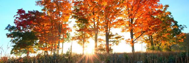 Fall Foliage 2014 – Somerset County, PA.