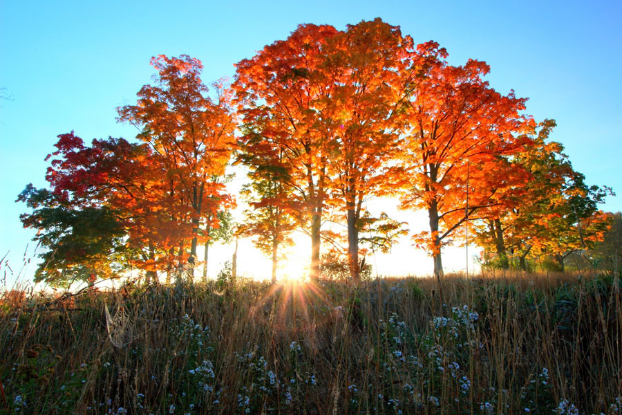 Fall Foliage Sunrise, Somerset County, PA.