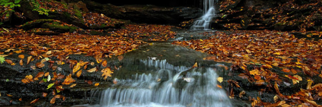 Fall Foliage at Cole Run Falls