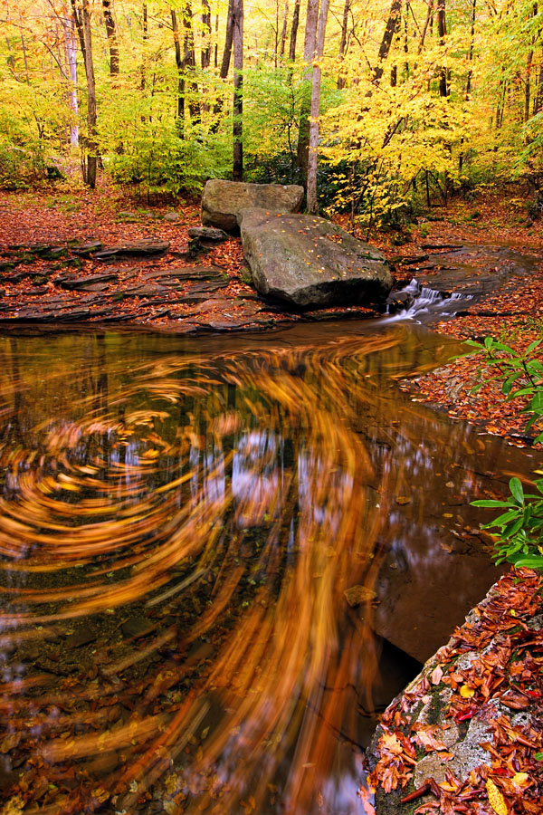Leaf Swirl at the Blue Hole, Forbes State Forest, Somerset County, PA