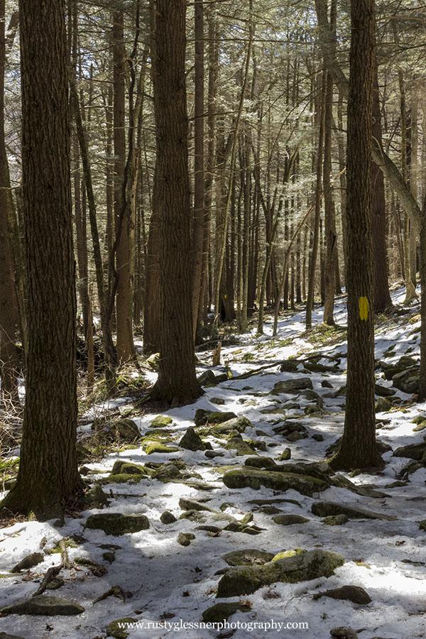 Jacoby Run Falls trail through hemlocks